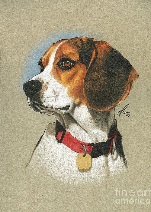 Beagle Greeting Card by Marshall Robinson