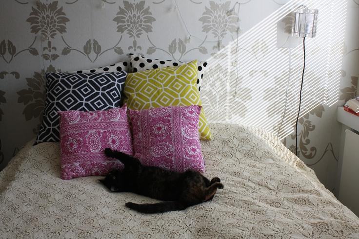 Cat having a nap.