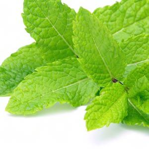 Peppermint is one of the main herbs for digestion