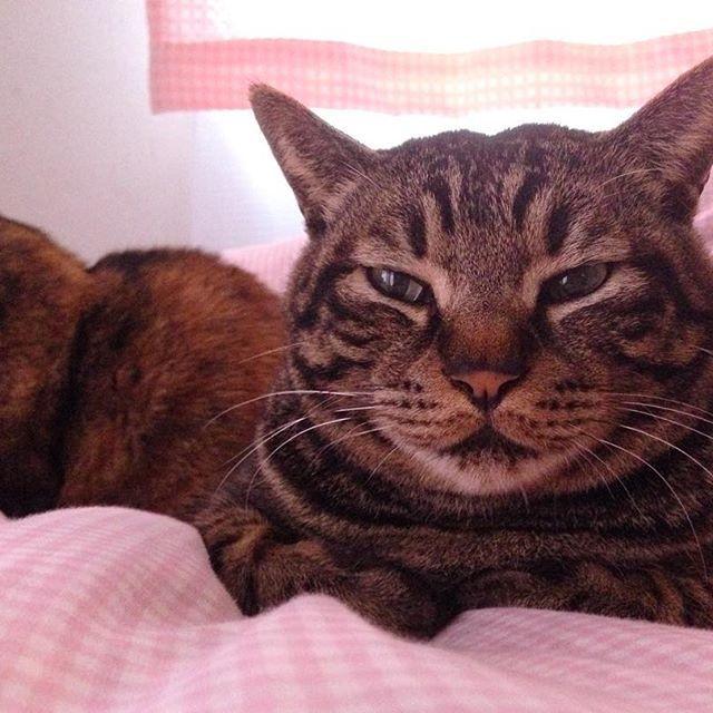 ・ 布団の上で満足そう😸💤💕 #愛猫#猫#ねこ#ネコ#ネコ部#にゃんこ#にゃんすたぐらむ#ねこすたぐらむ #ねこ部#ふわもこ部 #ぺこねこ部 #ねこばか#ねこのいる生活 #ねこ好き#みんねこ#可愛い#猫バカ#猫バカ部#ねこら部 #きじとら#catsofinstagram #catslover #catsagram #ilovecats#catslovers #catslovers#cute