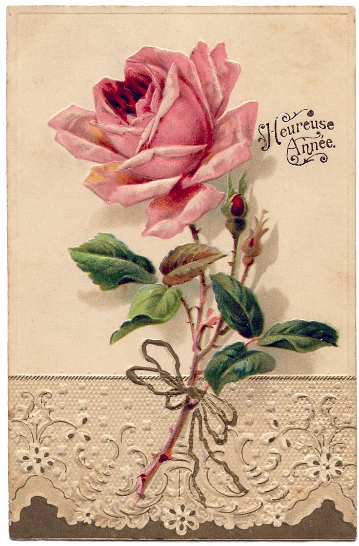 French Image - Beautiful Rose with Lace - The Graphics Fairy