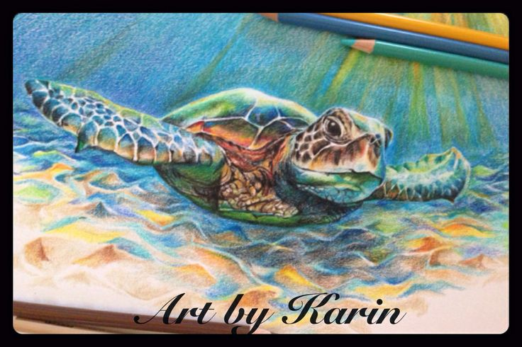 Color Pencil Quot Sea Turtle Quot Art By Karin Pinterest