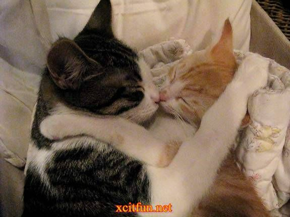 Animals kissing pic