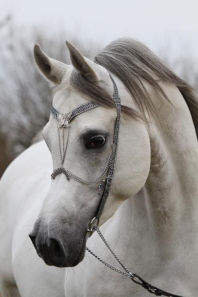 Arabian Beauty Photo by Reindert Jansen