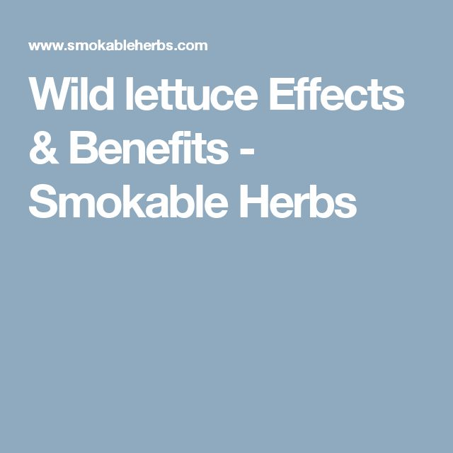 Wild lettuce Effects & Benefits - Smokable Herbs