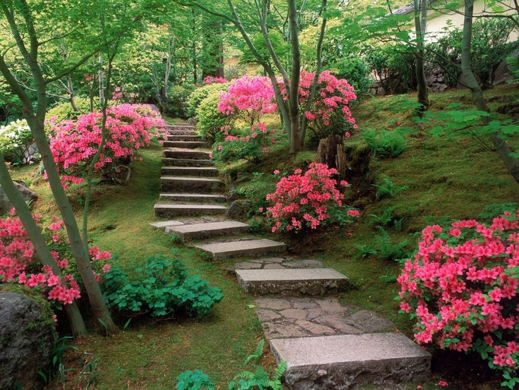 azaleas can do hills, despite shallow root structure.