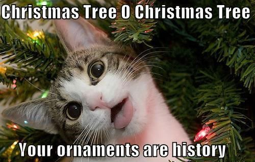 Best 50 Funny Christmas Memes | Quotations and Quotes