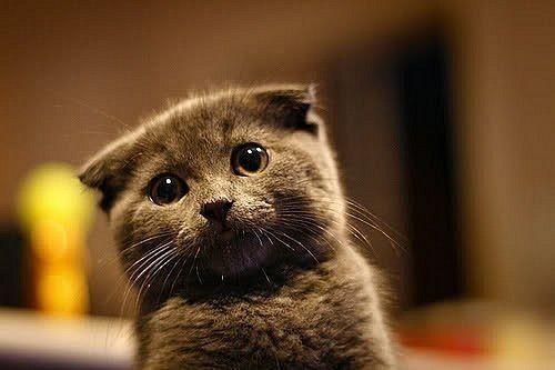 96 Best Poodle Puppy Images On Pinterest Standard