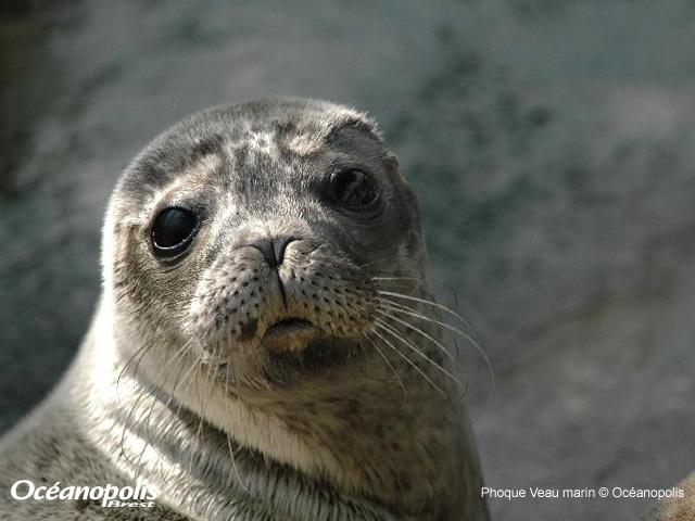 Phoque veau marin Oceanopolis | Finistère Bretagne