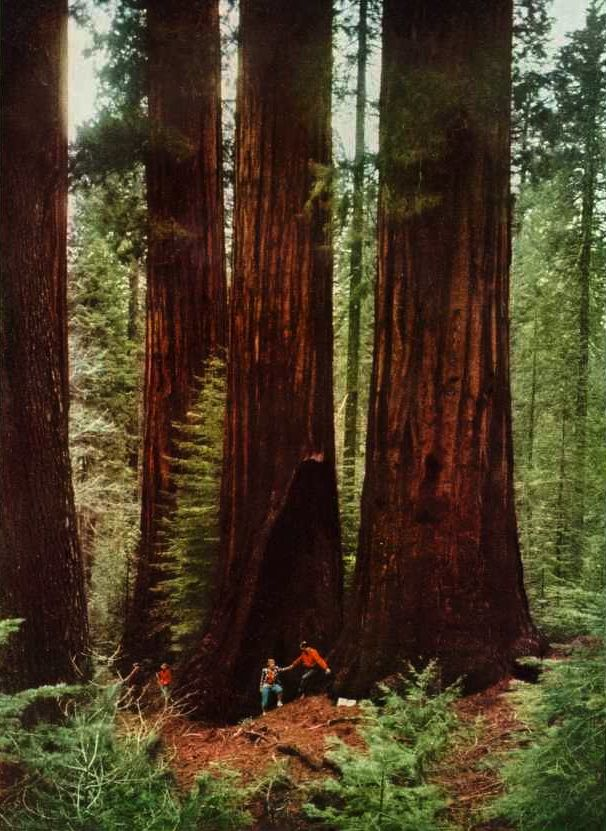 sequoia national park senior singles Home / our hiking trips explore the best trails in the bay area with the outdoor adventure club guided hikes  yosemite national park, sequoia national park, .
