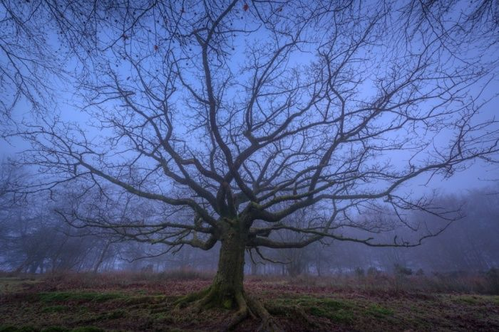 SOMERSET, UNITED KINGDOM - FEBRUARY 09: A bare tree stands in the mist on a very cold winters day in the Quantock hills on February 09, 2015 in Bridgewater, Somerset, England.