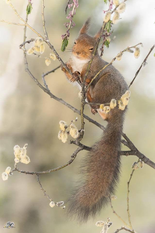 Sleepy little squirrel