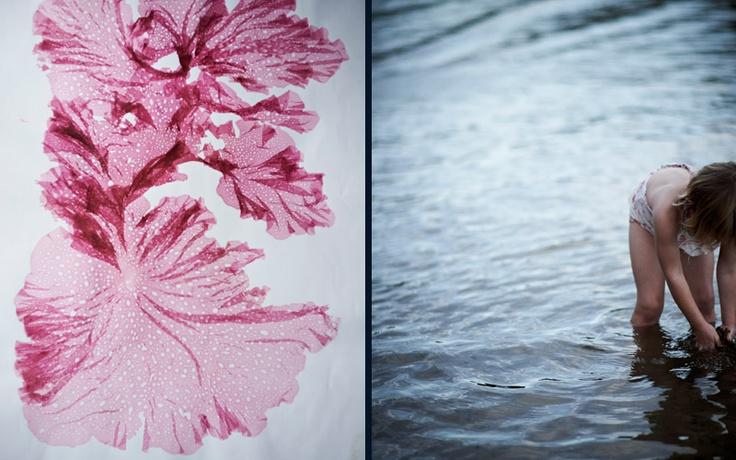 mikkelvang seaweed_1.jpg  - flowers of the sea. vogue living