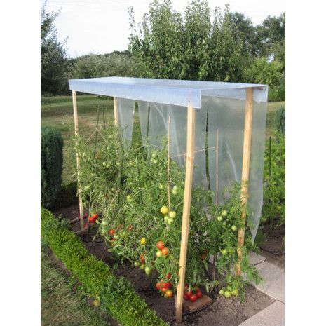 Abris à tomates pour les abriter de la pluie et les protéger des maladies comme le mildiou.