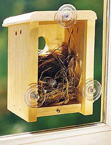 Backless bird house with suction cups for the window= you get to see the baby birds hatch! I LOVE this!