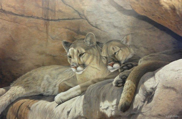 Mountain lion painting by Rob Macintosh