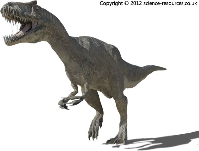 Allosaurus (Different Lizard) Allosaurus was the largest meat-eating dinosaur of the late Jurrasic.