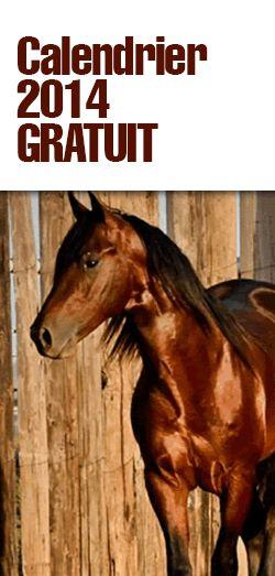 Gratuit – calendrier 2014 soins des chevaux. http://rienquedugratuit.ca/echantillon-gratuit/calendrier-2014-chevaux/