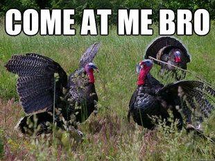 turkey meme