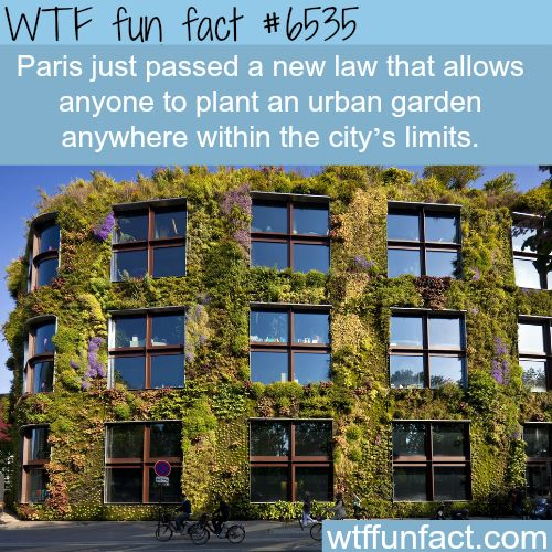 Paris Urban Gardens Fun Facts