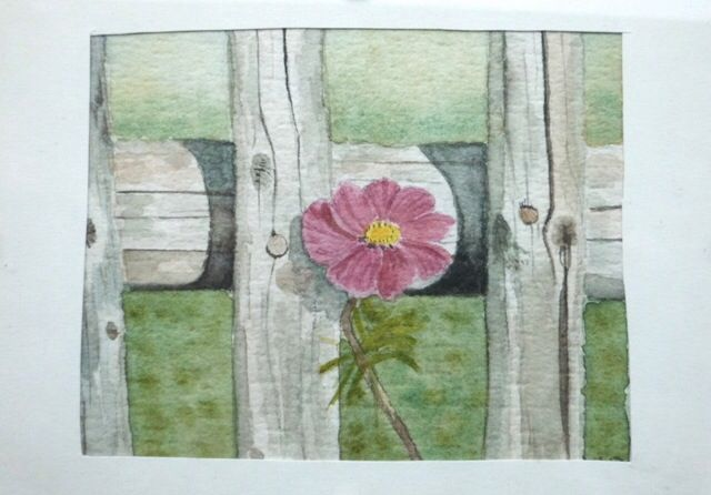 Flower on fence.  Watercolor.                 Signed by Wilma                                     www.werkvanwilma.nl