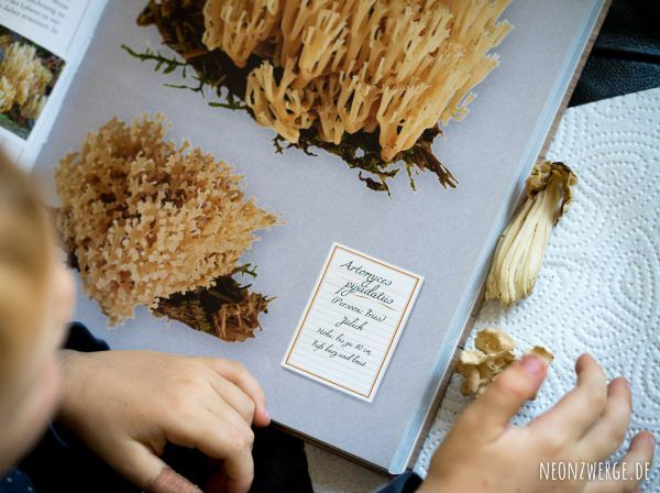 Pilze bestimmen mit Kindern. Montessori Ideen für den Herbst. Die besten Pilzbücher für die ganze Familie
