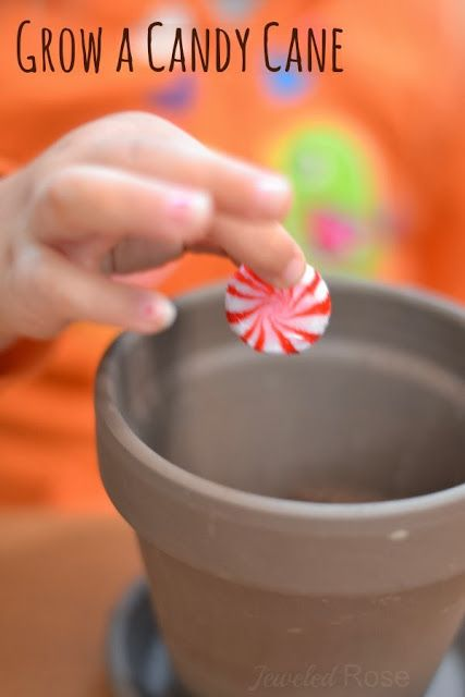 this is adorable!! // Grow a candy cane this holiday, and delight your little ones with the magic of the season.