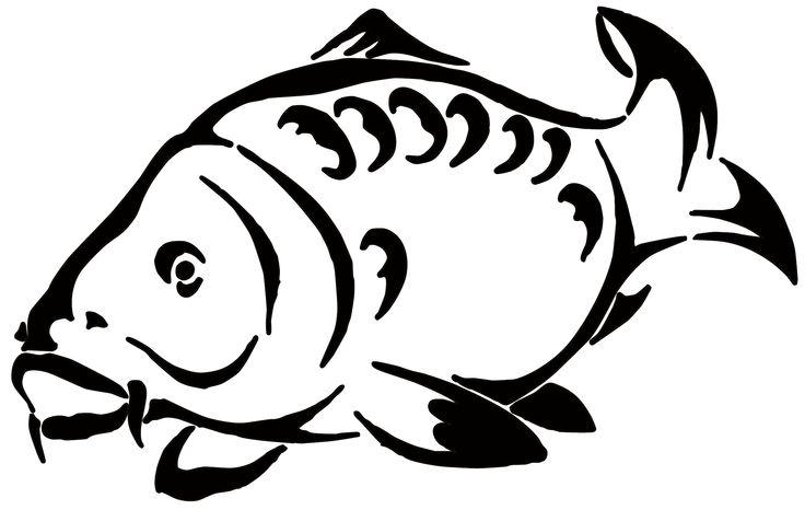 Carp Drawing Big Fish