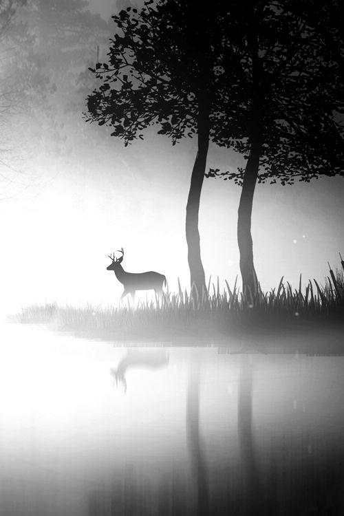 This photo is beyond peaceful. It is quiet, and serene. Love, love, love this. de