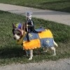 #12-knight-and-steed-dog-costume