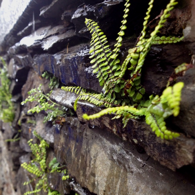 how to create a living moss and fern wall