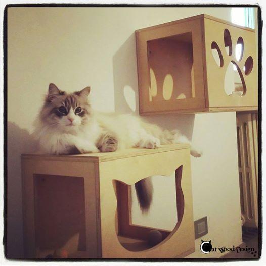 #cubi da parete in legno per #gatti #cat #cube