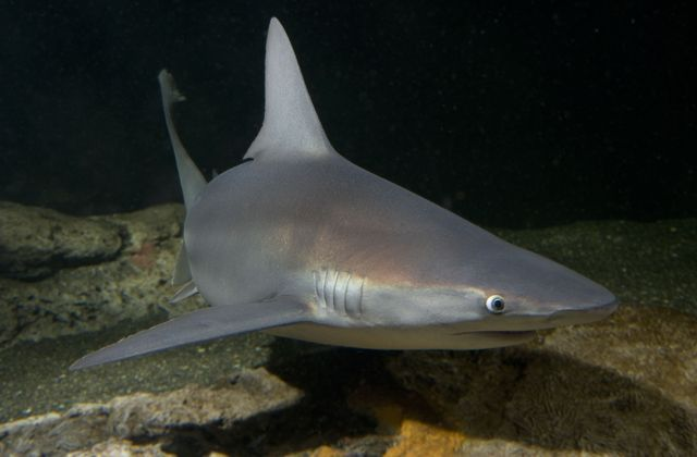 Happy #SharkWeek! Click through to meet some of the FIN-tastic species that call the Aquarium home!