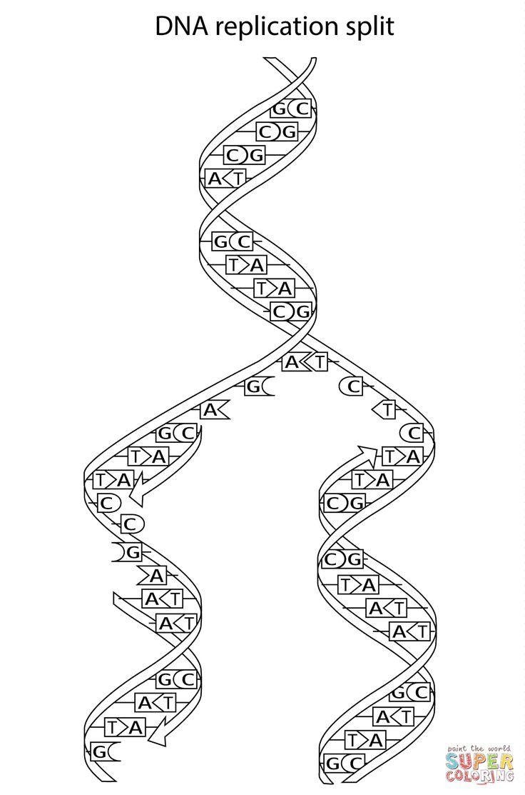 Dna Replication Coloring Worksheet Dna Replication Coloring Worksheet In 2020 Color Worksheets Free Printable Coloring Pages Coloring Pages