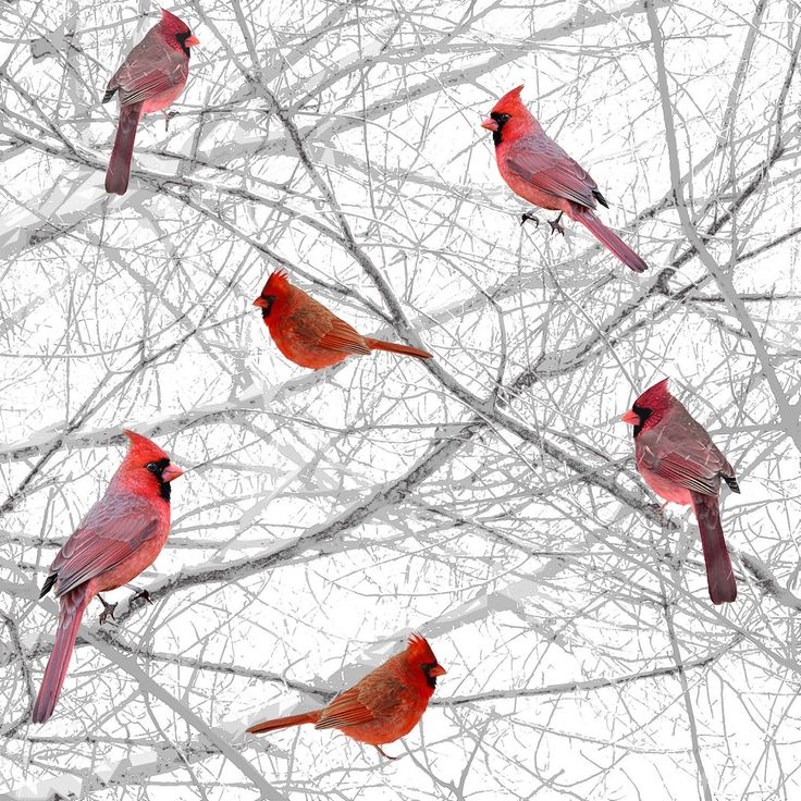 Witte rode kardinalen katoenen stof uit de collectie van de Lodge eland door Henry glas - berken schors hout door CurlyGirlFabric op Etsy https://www.etsy.com/nl/listing/452154434/witte-rode-kardinalen-katoenen-stof-uit