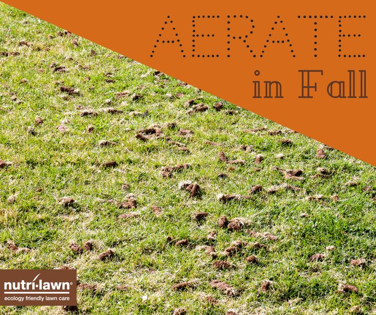 Breathe new life into compacted soil with a core aeration. This will help air, water, and nutrients reach the root easily, giving you healthy green grass in time for Spring 🍂  Fall is a great time to schedule this in, since the grass is actively growing.
