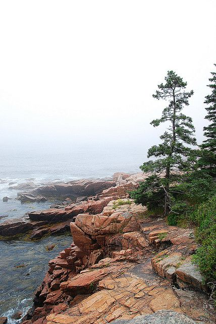 Acadia National Park - should go back to this one.  Didn't do enough hiking because the kids were young.