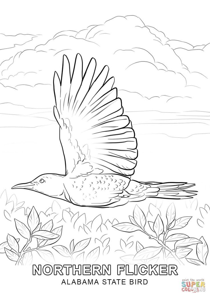 Click The Alabama State Bird Coloring Pages To View Printable Version Or Color It Online