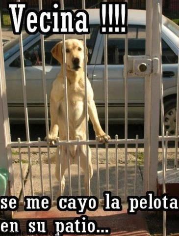 fotos chistosas de perros