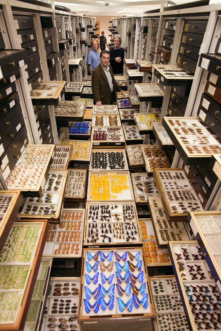 over the course of his decades at the smithsonian, photographer chip clark documented the departments and storage areas otherwise unseen to public view.