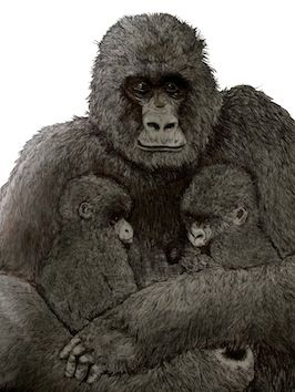 Gorillas - Kate Morgan - Artist & Illustrator