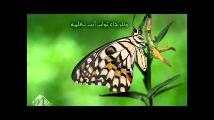 الحمدلله مادام الوجود له نشيد روعه محمد الجباري Insects Moth Animals