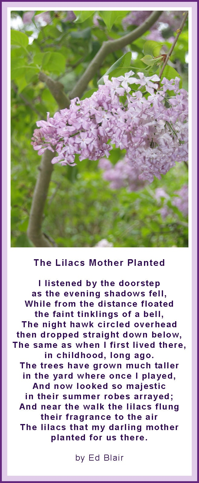 44 best images about Lilacs, A slice of heaven! on Pinterest ...