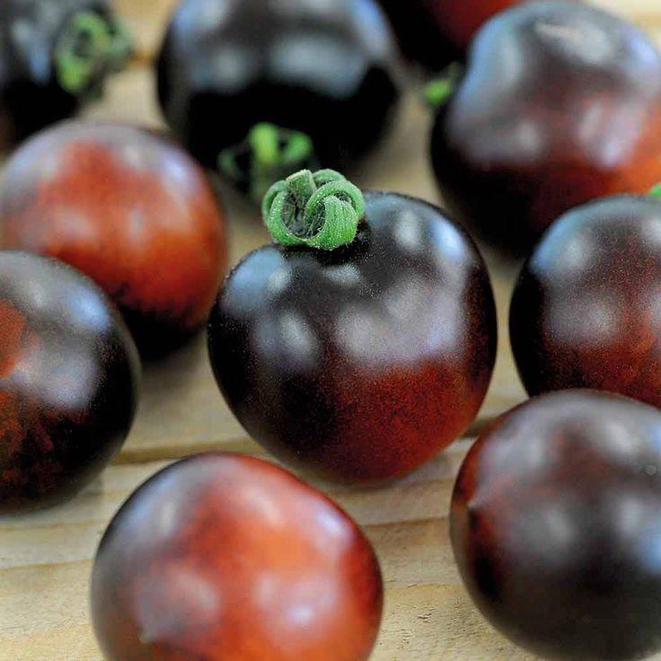 Tomato 'Indigo Cherry Drops' | Thompson & Morgan