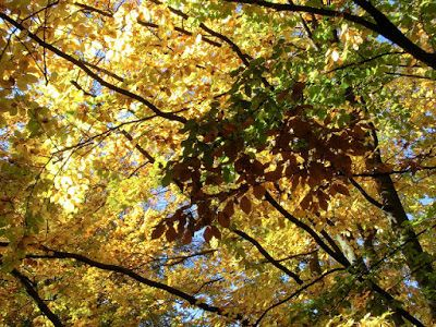 WWW Wiersze Wycieczki Wspomnienia: Wiersz dla dzieci o jesieni: Jesienne drzewa