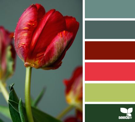 flora hues - would coordinate beautifully w/the maroon on my DR/kit walls (dark slate blue for chalk paint on DR table and chairs, leave tabletop plain - maybe stain it a squosh darker...? main accents in coral and apple, w/secondary accents for summer in lt slate and for winter in forest)