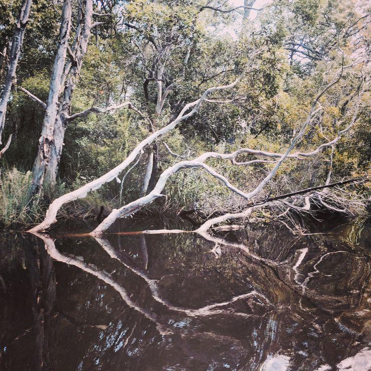 Serene reflections on Noosa Everglades #visitnoosa #seeaustralia #thisisqueensland