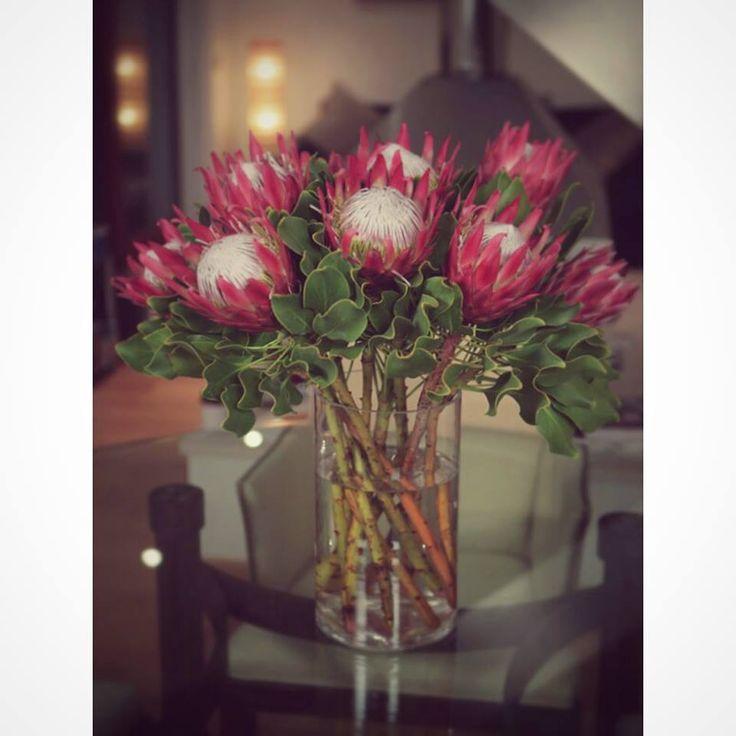 238 best protea flowers images on pinterest plants for King protea flower arrangements