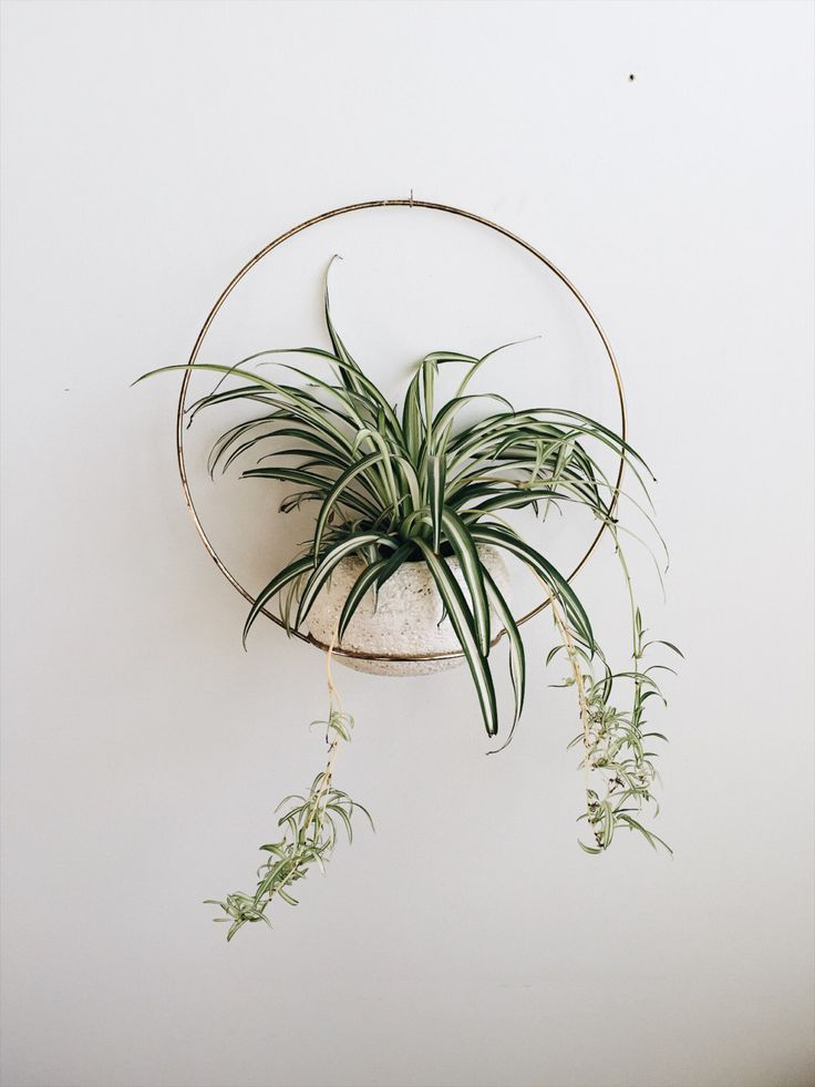 Vintage metal hoop with 8 ring for planter. Great patina and character to this piece. Condition great vintage condition  Measurements Hoop 18 planter 8  >>>>> Follow along on instagram for sneak peeks https://www.instagram.com/liminalcollective  >>>>> Other items available on https://www.etsy.com/shop/liminalcollective