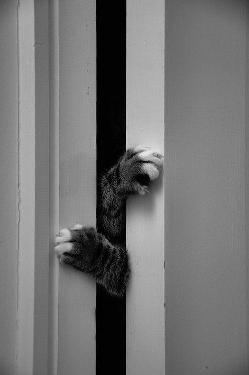 399 best adorable cats images on pinterest cute kittens for Cat bathroom door